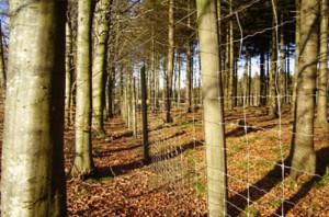 Pajhede-skov-2